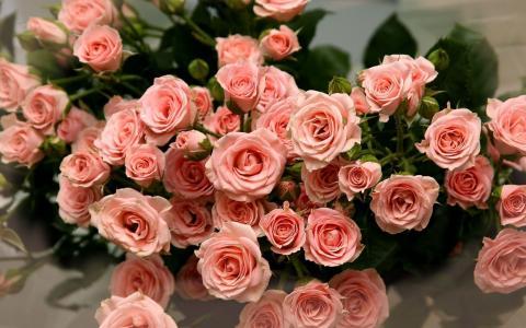 花束,玫瑰