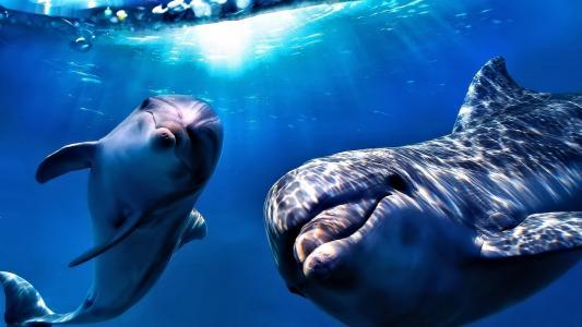 海洋,水,海豚