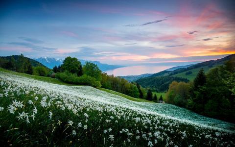 自然,山,景观,场,草地,鲜花,森林,房子,湖,天空,日落