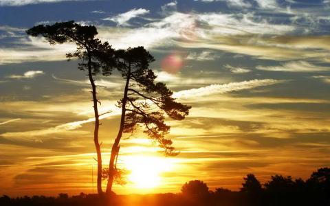 性质,树,云,天空,日落,晚上