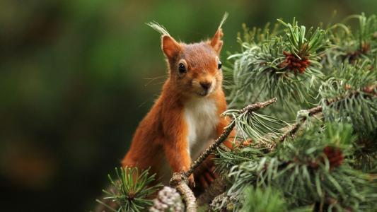 松鼠,树枝,树