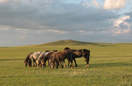 koshkarbai,牧群,牧场,马,马,哈萨克斯坦,草原,动物,放牧