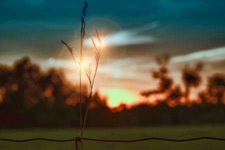 小穗,美女,太阳,雷,天空,日落,剪影,电线