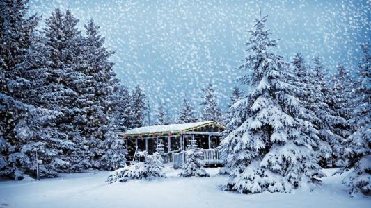 圣诞树,房子,森林,雪,新年,花环