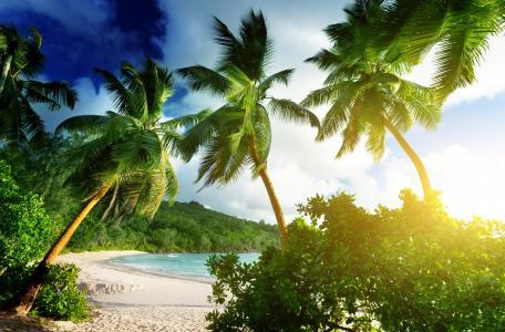 照片,性质,热带,海滩,棕榈树,丛林,山,海洋,光,太阳,天堂