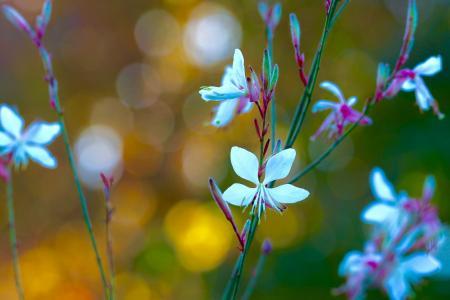 散景,鲜花,宏
