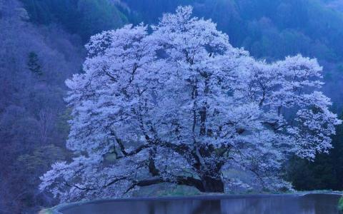 边缘,湖泊,树木,悬崖,朵朵