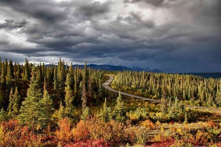 自然,景观,全景,山,距离,道路,森林
