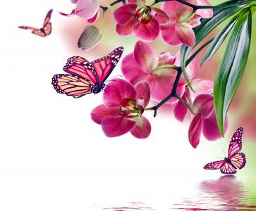 春天,积极,photoshop,主题,水,兰花,花朵,蝴蝶