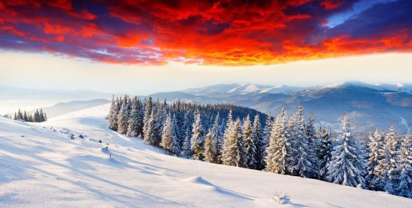 森林,雪,山,云,冬天,枞树,发光,黎明