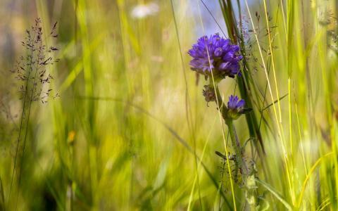 宏,性质,鲜花,草,夏天