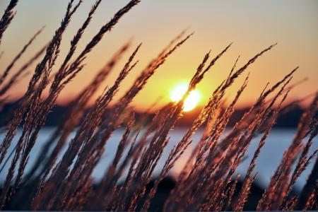 阳光,植物,清晨,黎明