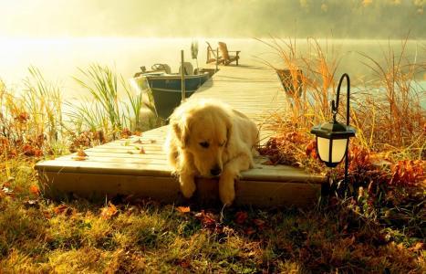 自然,河,石工,码头,船,休息,钓鱼,秋季,早晨,雾,美丽,积极,狗