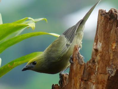 鸟,美女,世界鸟类