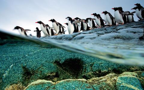 冰,雪,野,水,冰山,企鹅