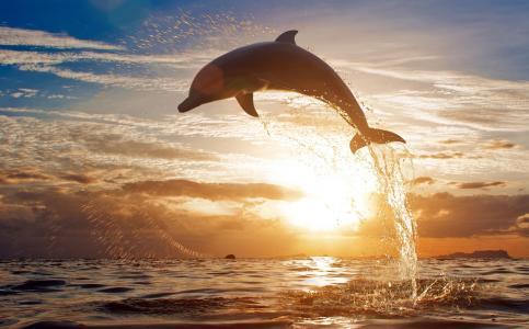 动物,海豚,海,日落,喷雾,跳跃