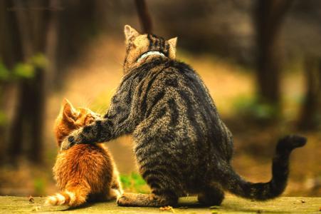 猫,猫,小猫,家庭,友谊
