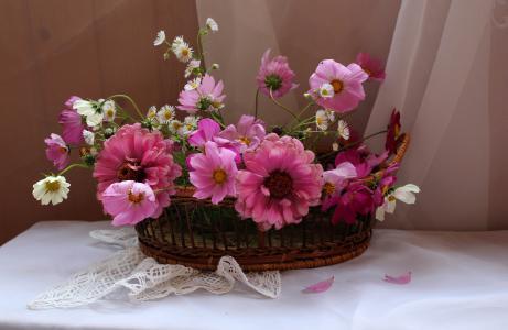 餐巾,面料,面纱,购物篮,鲜花,百日草,kosmeja,夏天