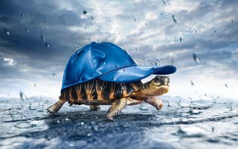 乌龟,戴着帽子,下雨