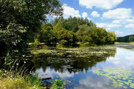 夏天,假期,钓鱼,河,自然,森林,美丽,主题,天空,云