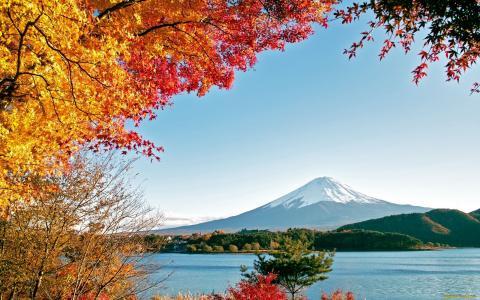 富士山,秋天,高山,树木,黄叶