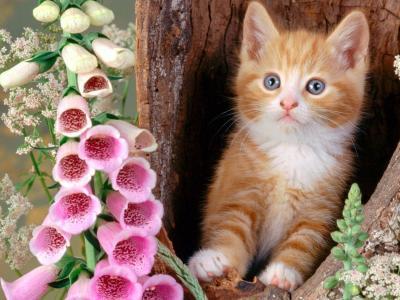 小猫,红发,鲜花