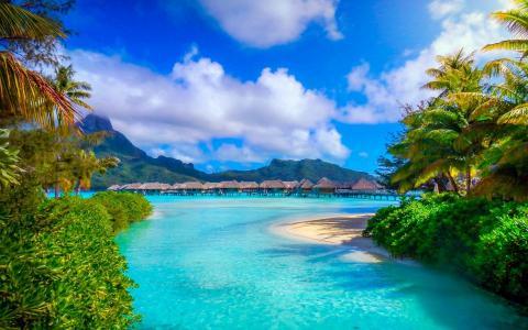 自然,山,度假村,美丽,热带地区,棕榈树