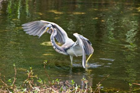 一只鸟,一只鹤,一条河,一条分支。