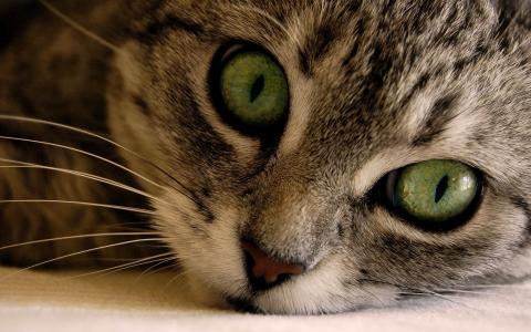 壁纸,猫,vzlyad,眼睛,绿色