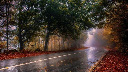 路,森林,叶子,秋天,雾