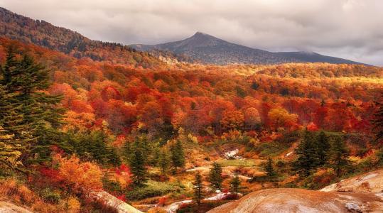 秋天,山,森林,美丽,黄色背景,天空,阴云密布