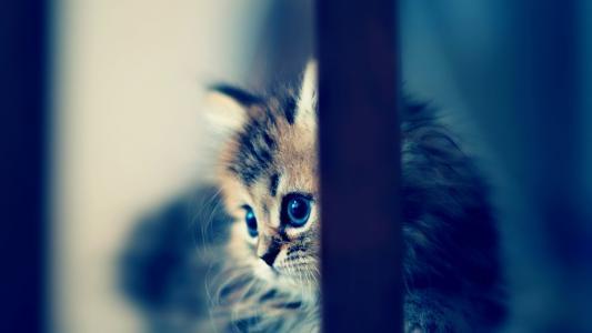 小猫,模糊,可爱,宝贝