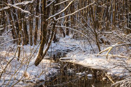 冬天,森林,水,冰,冷,对比,太阳