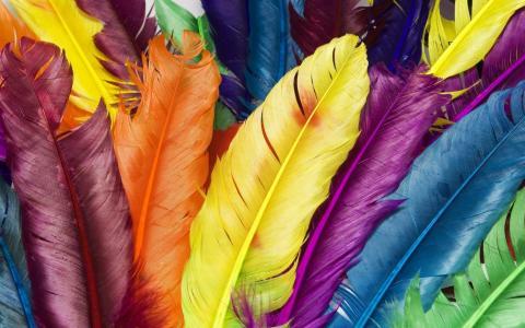 五颜六色,羽毛,五颜六色,杂色的