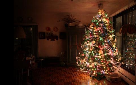 新的一年,枞树,黑暗的背景,夏天的住所