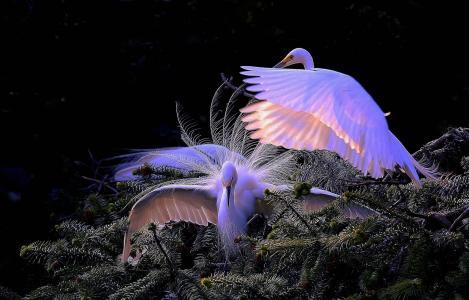 世界鸟类,鸟类,起重机,蒸汽,树枝