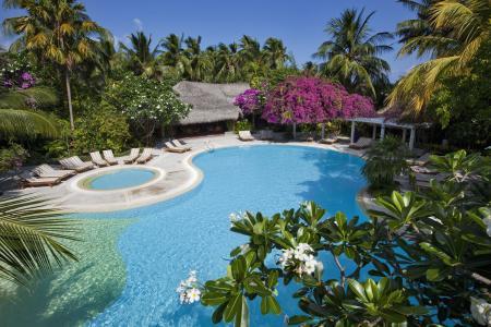 马尔代夫,平房,游泳池,日光浴床,棕榈树,树木