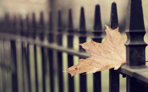 叶,秋,叶壁纸,秋壁纸,微距壁纸