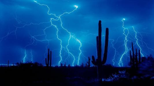 夜,雷雨,闪电,仙人掌