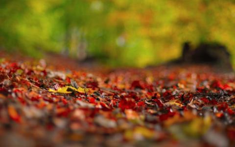秋天,叶子