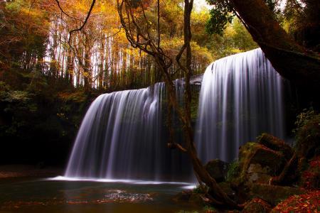树,瀑布,河,秋天,性质
