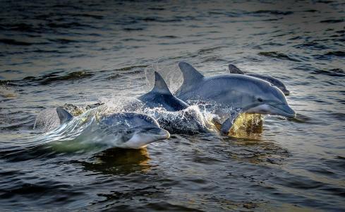 海豚,自然,海洋,哺乳动物,美丽