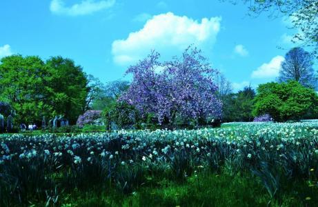 自然,公园,景观,水仙,春天