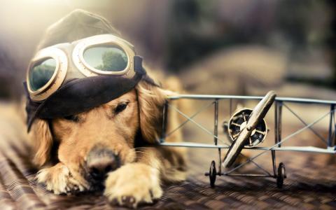 飞机,飞行,梦想,眼镜,狗