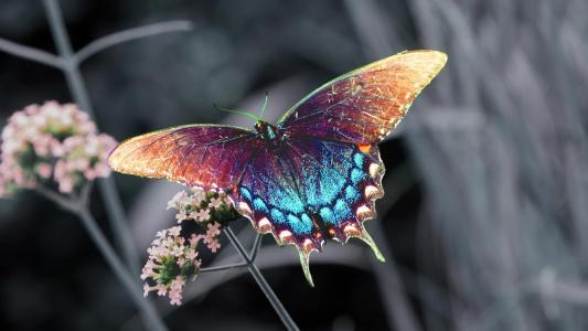蝴蝶,花卉,彩虹的颜色,罕见,不寻常,宏观,美丽