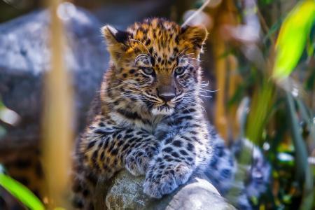 豹,婴儿,动物,胡子