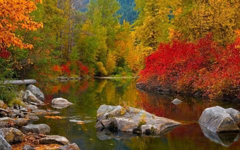 冷静,水,秋天的五颜六色的颜色