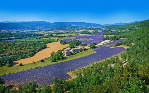 法国,景观,领域,薰衣草,Valensole山,性质