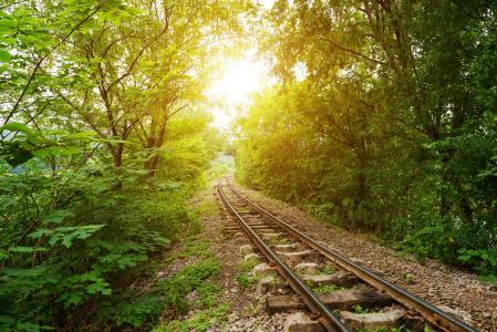 铁路,树木,光线,性质