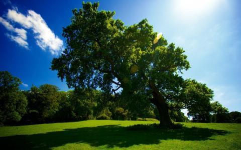 夏天的风景,自然,树木,林间空地